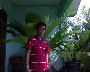 my anthurium