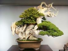 1e540-bonsai-800-tahun